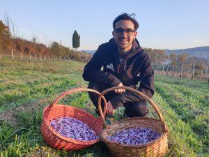 Guadagno coltivando Zafferano